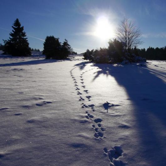sneeuw.hesbornerkuckuck